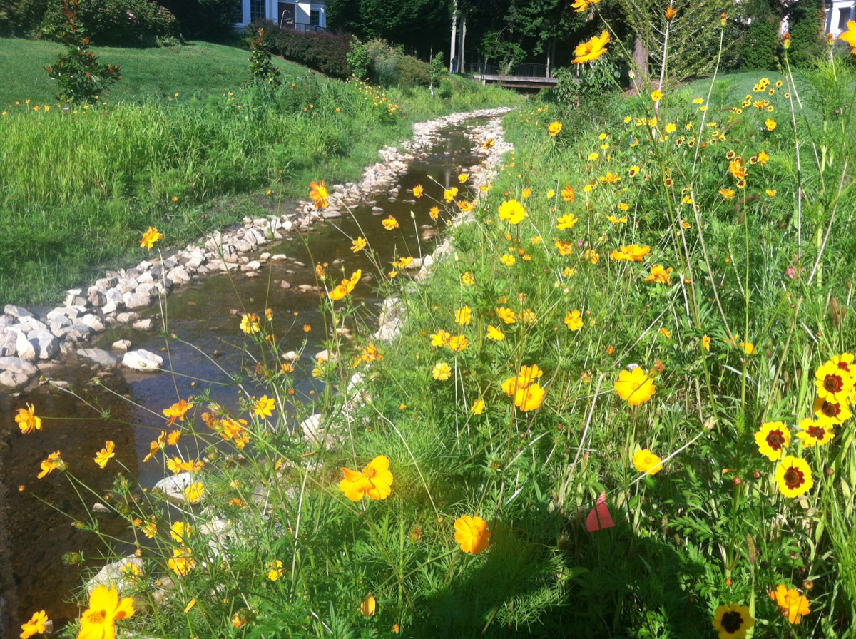 Field of flowers next to a stream at Gardens on Glenwood