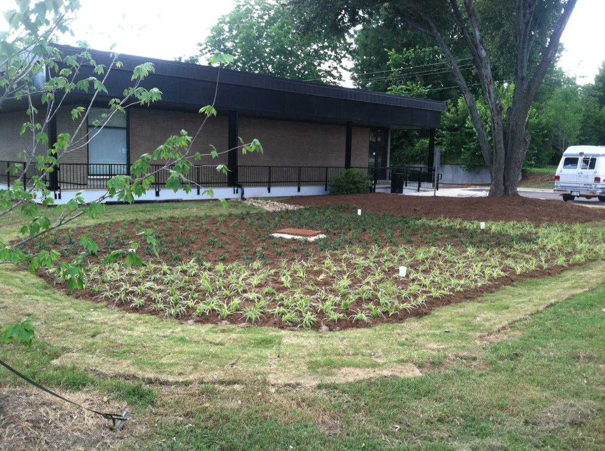 Landscaping plants at Harrison Library
