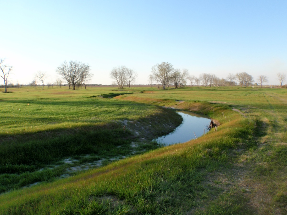 Water stream flowing through a grassy field with bare trees in the background