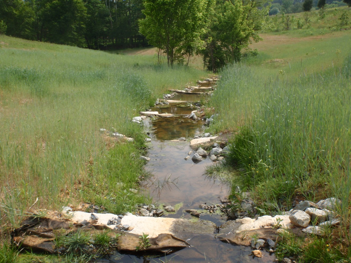 Creek flowing in the middle of a grassy field